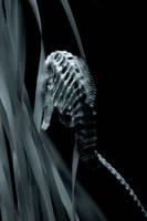 Skeletor by Moonbeam13