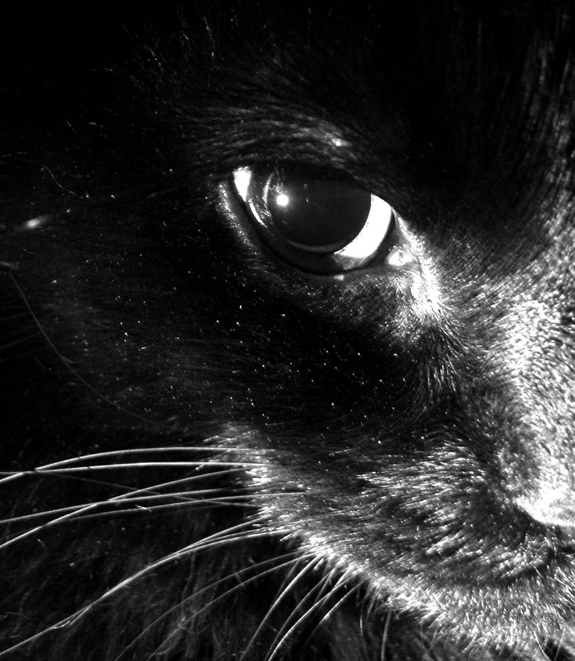 Black cat by Moonbeam13