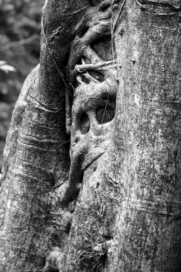 Tree Spirit by Moonbeam13