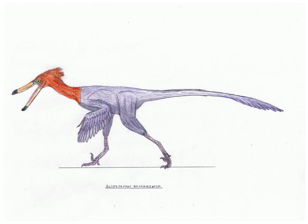 Buitreraptor gonzalezorum by Pappasaurus
