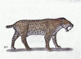 Smilodon fatalis by Pappasaurus