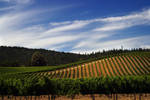 Goldeneye Winery