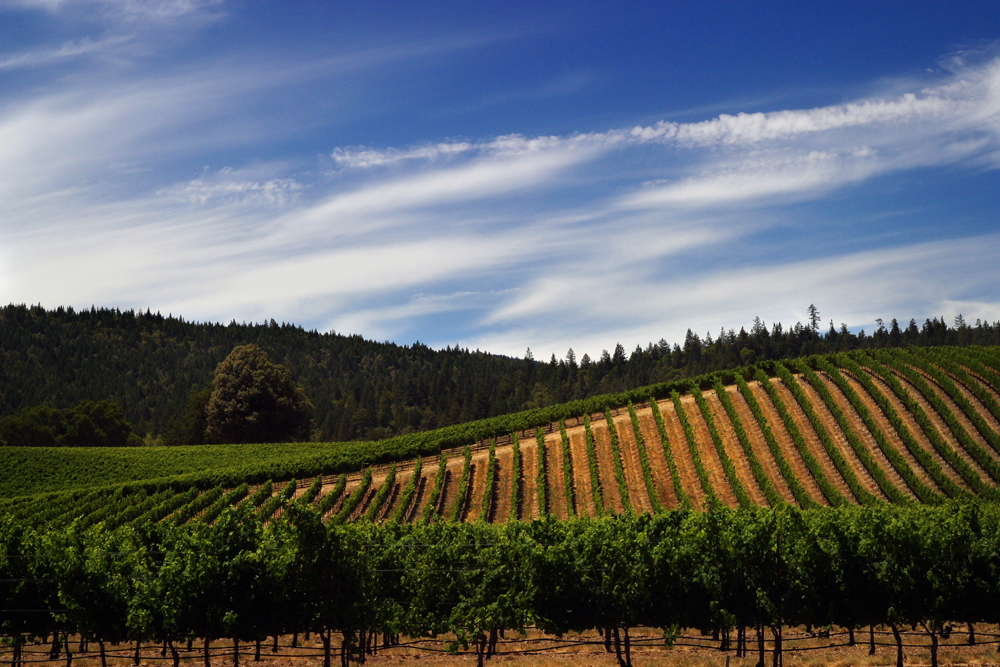 Goldeneye Winery by Vividlight