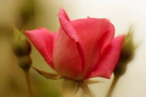 Soft Caress by Vividlight