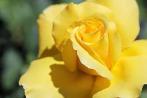 Big Yellow by Vividlight
