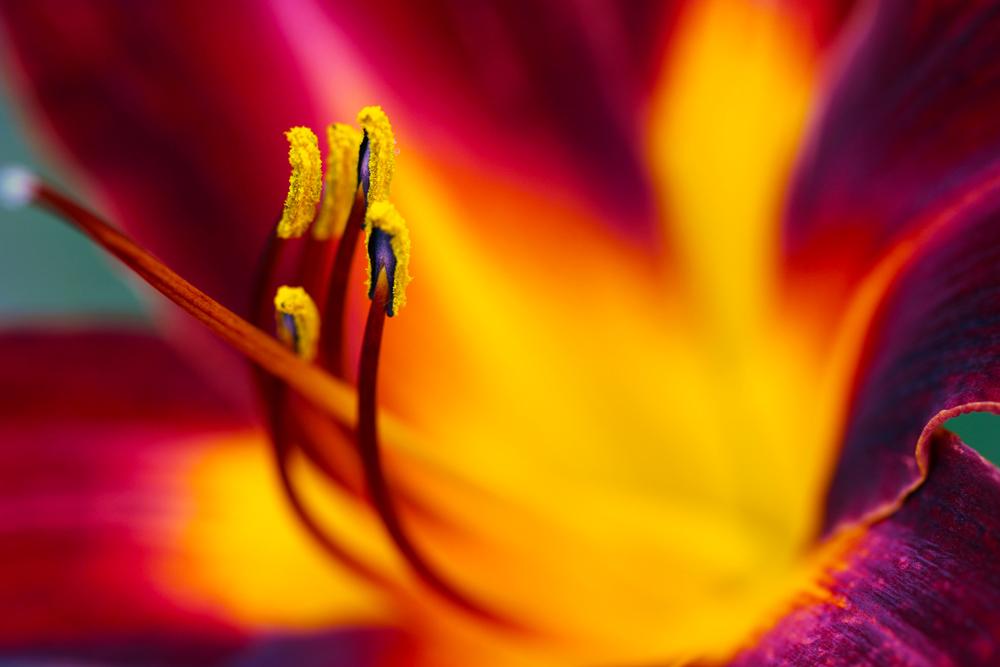 Nature's Symphony by Vividlight