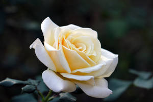 Simple Beauty by Vividlight