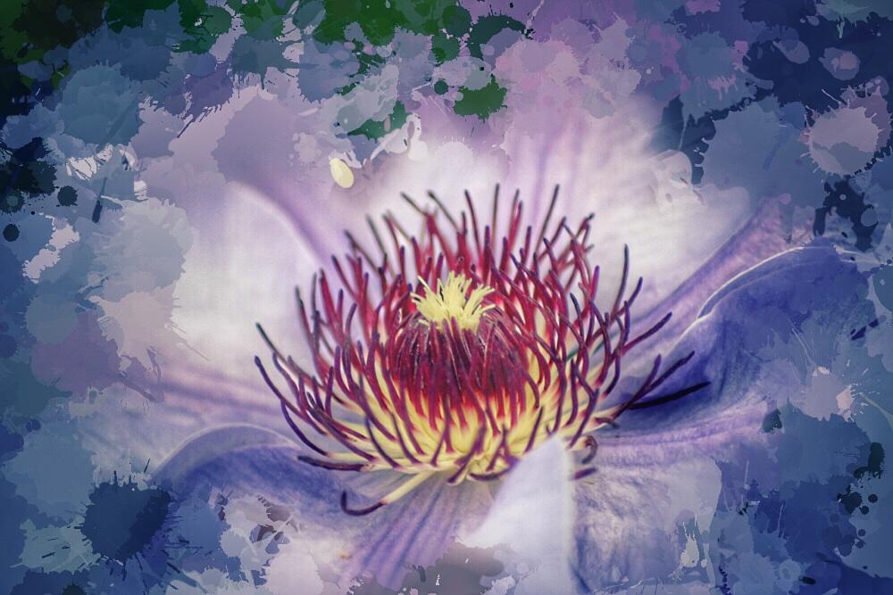 Purples by Vividlight