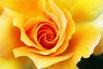 sunny one by Vividlight