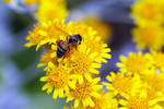 Bee Yellow by Vividlight