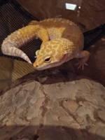 Mushu chilling on hammock by ChrisSowinski