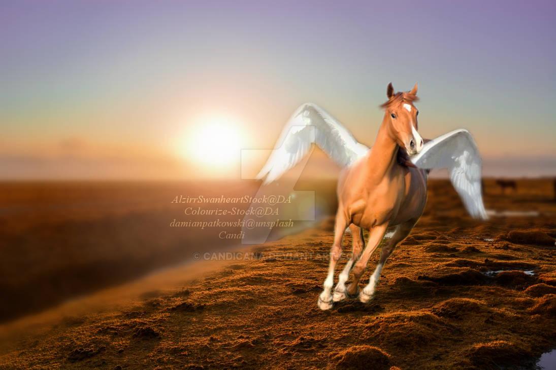 Arabian Angel