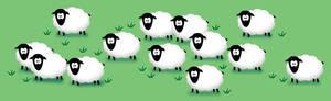 Shocked Sheep