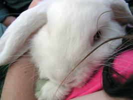 Bunny Love by recurring