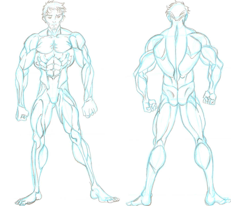 Male Anatomy Reference 1 by naiser on DeviantArt