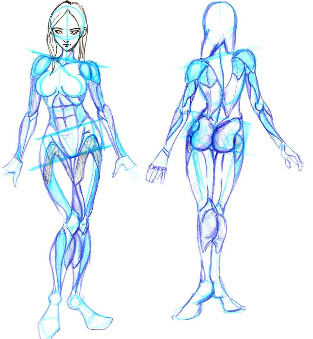 Human Anatomy References For 3d Artists 3d Modeling Forum