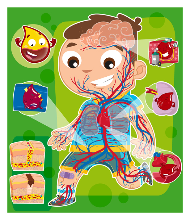 Sistema circulatorio by Diser25