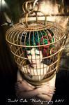 bird cage with hummingbird