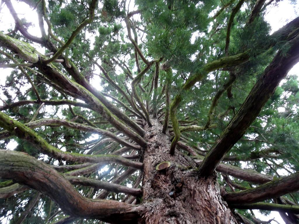 Tree by Ainnita