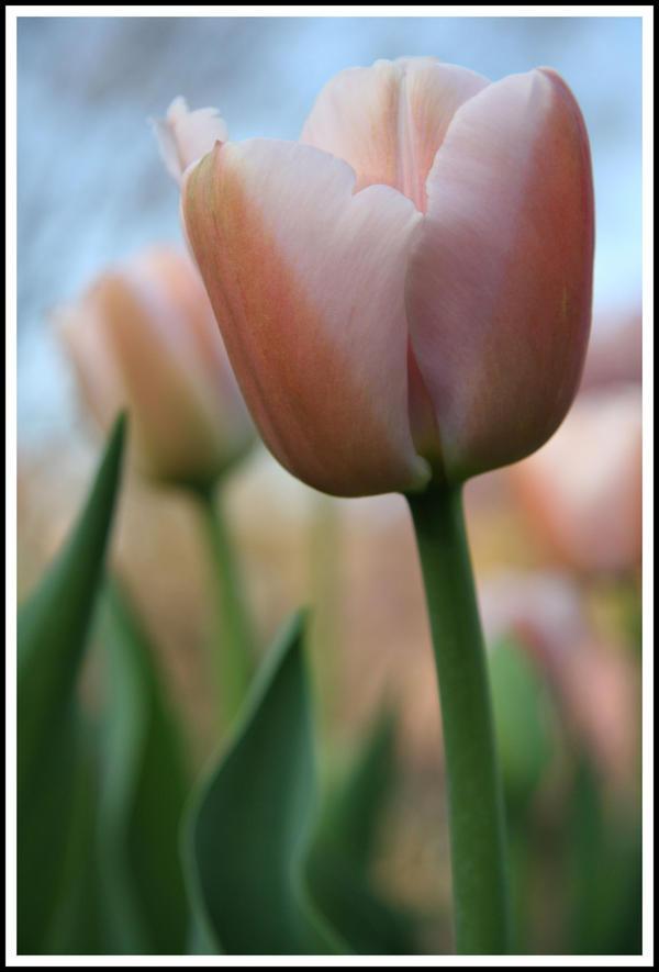 http://fc04.deviantart.com/fs47/i/2009/192/2/0/Flowers_3_by_EdKPhotography.jpg