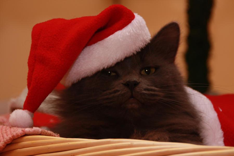 Meowy Christmas by ryn004