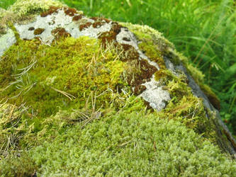 Mossy rocks by dbug