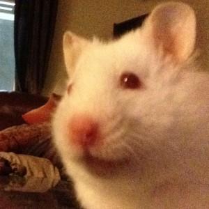 munchengirl's Profile Picture