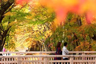 Momiji Corridor @ Kawaguchiko Lake (Fujisan)