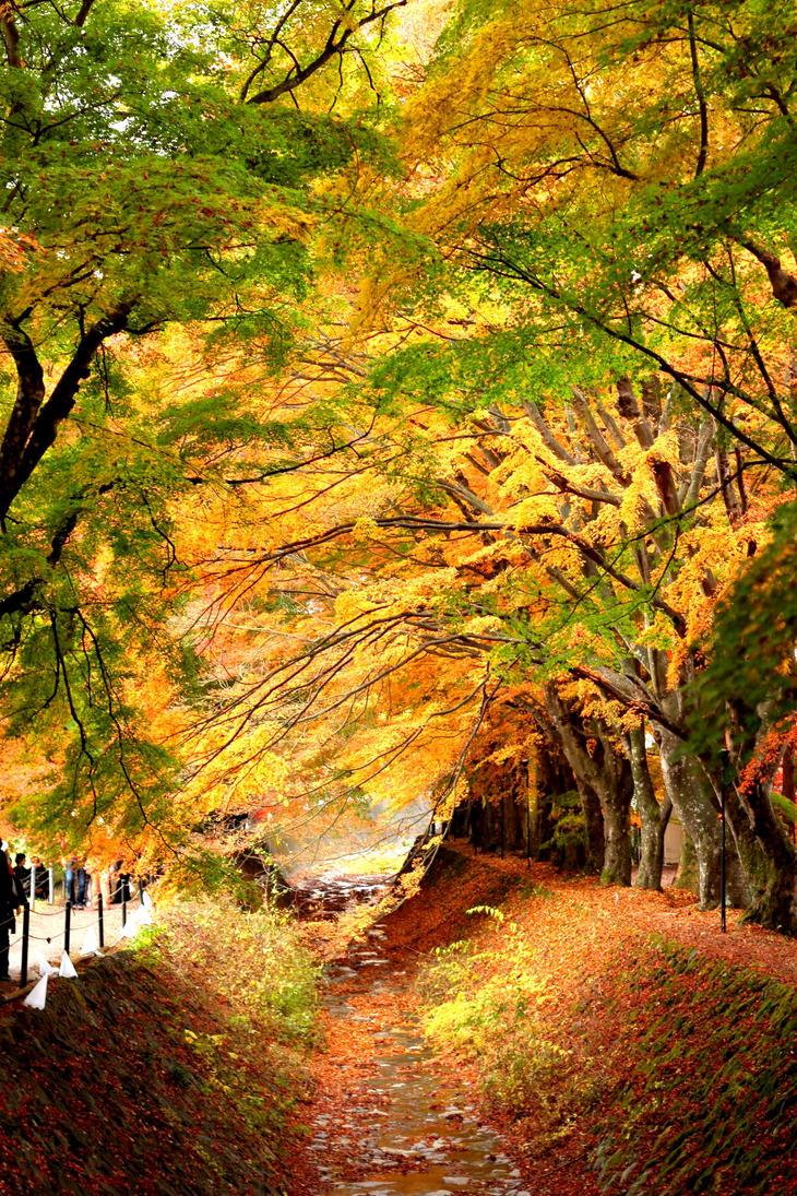 Momiji Corridor @ Kawaguchiko Lake (Fujisan) by elpheal