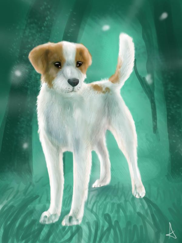 Kenzo the Jack Russell Terrier by Aussienka on DeviantArt