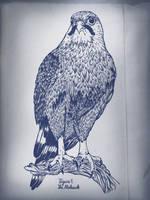 The Mohawk by rockst3ady