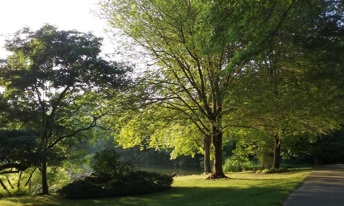 Morning Tree by jon2nson