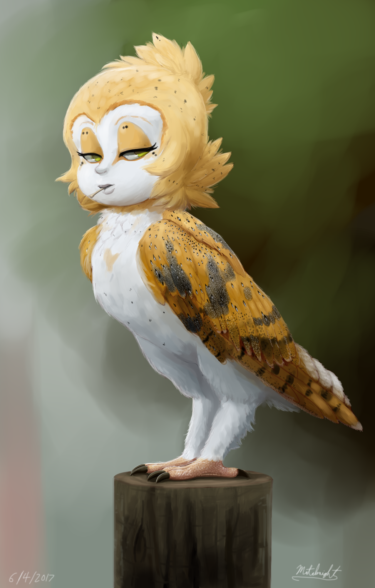Barn owl by mataknight on deviantart for Owl beak drawing