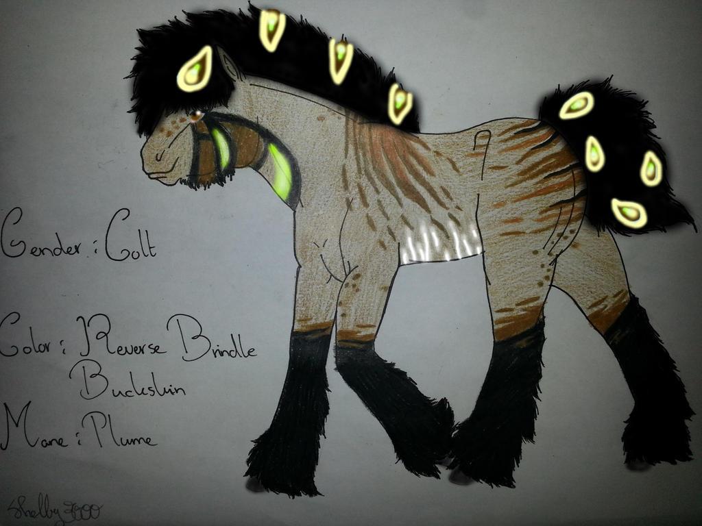 Foal Peaturk X Buckskin by Shelby-3000