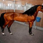 Horse Isle 2 Zen, In a stall? by AkitaHaru