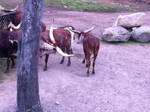 big horned cows? by SolarXolverite