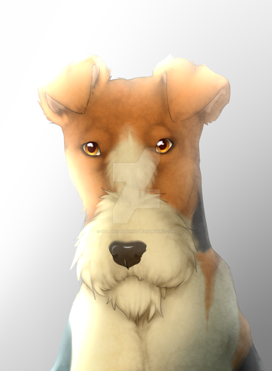 Foxterrier by SolarXolverite