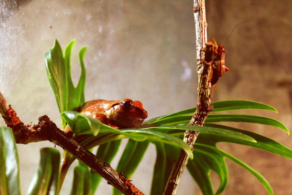 Froggy by SolarXolverite
