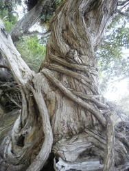 big roots 5
