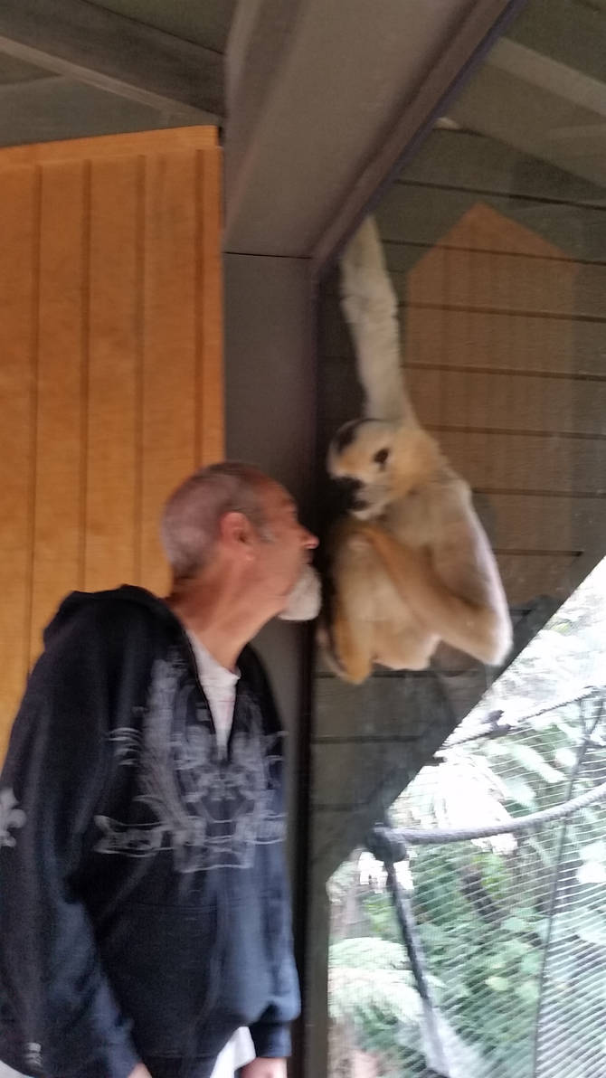 Monkey face 3