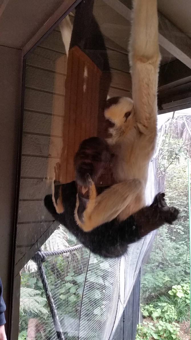 Monkey Face 4