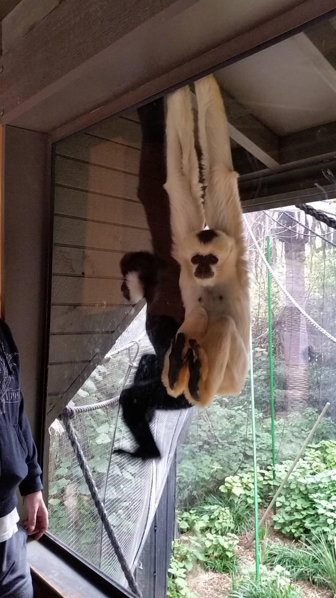 Monkey Face 5