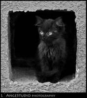 Wild cat by Sv-Batalina