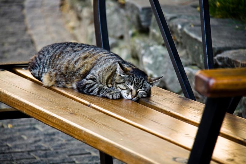 cat by Sv-Batalina