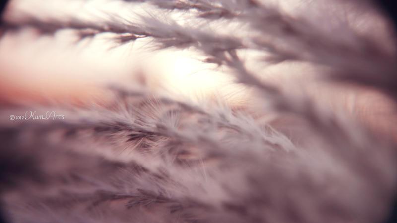 Winter Softness by kumArts