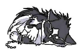 Chibi wolf girl drawing