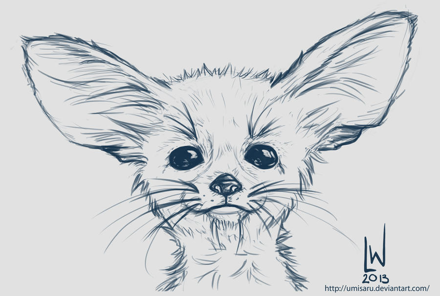 Image Result For Fennec Fox Coloring