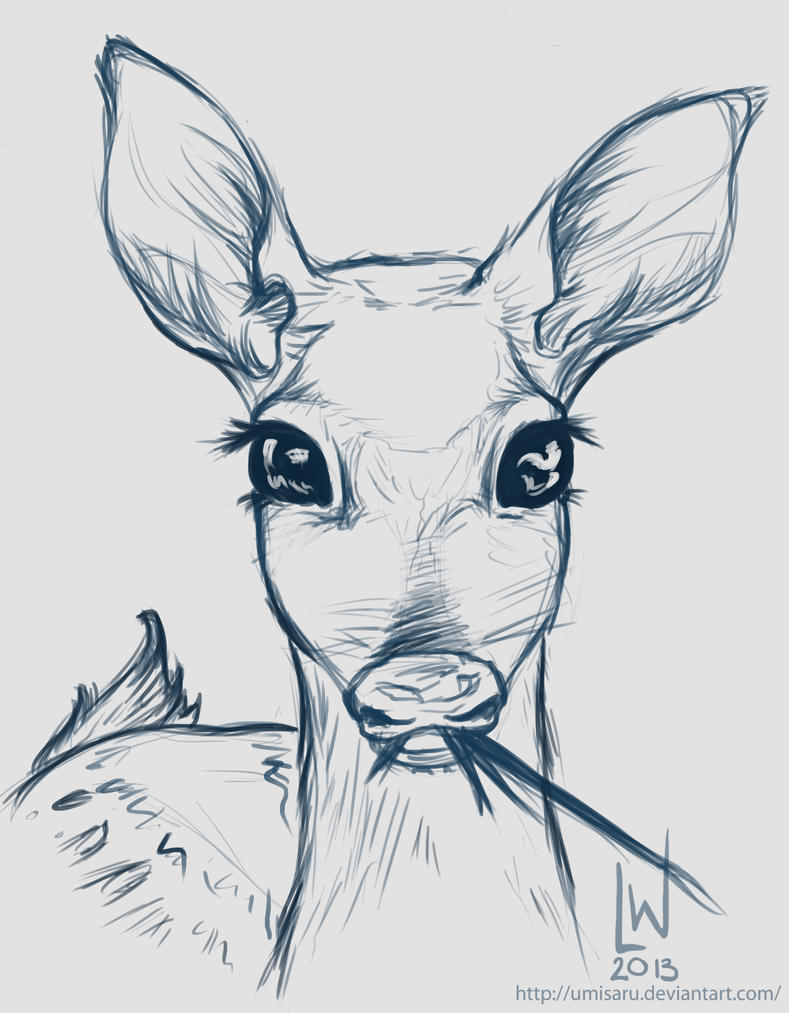deer fawn sketch by umisaru