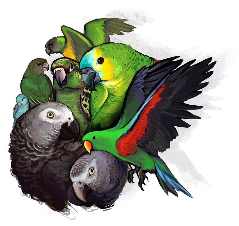 Parrotssss by lackofa