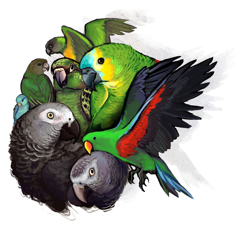 Parrotssss by lackofa